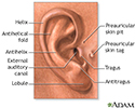 Medical findings based on ear anatomy