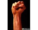 Surface anatomy - normal wrist