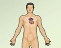 Electrocardiogram (ECG) test overview
